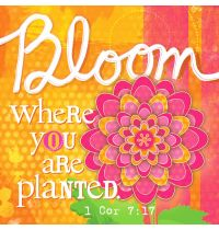 Magnet canvas  Bloom